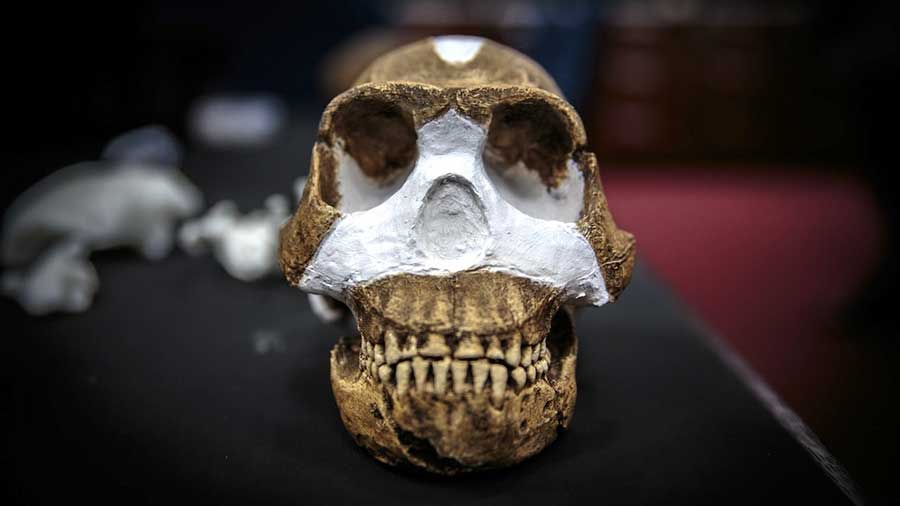 Homo-Naledi-South-Africa