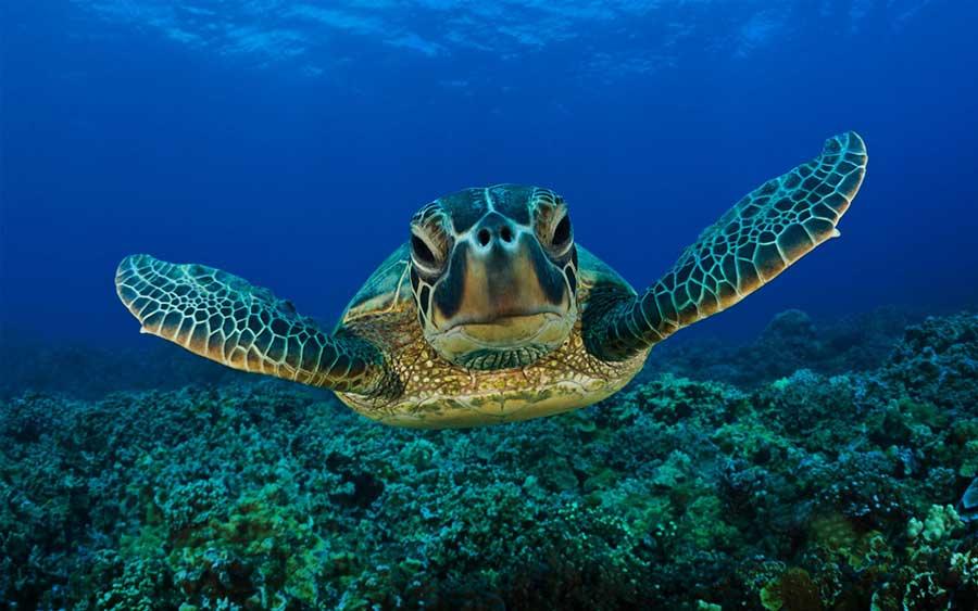 costa-rica-turtles-tourist