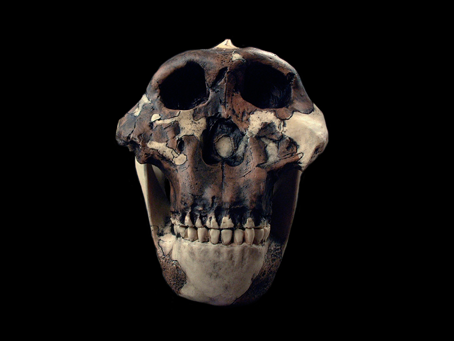 New-study-determined-how-ancestors-heard