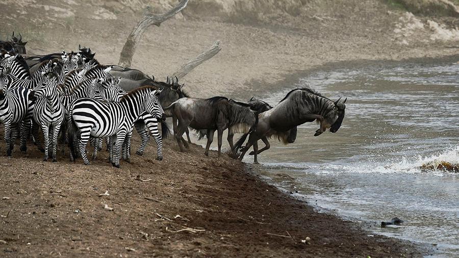 Serengeti-Migration,-Africa