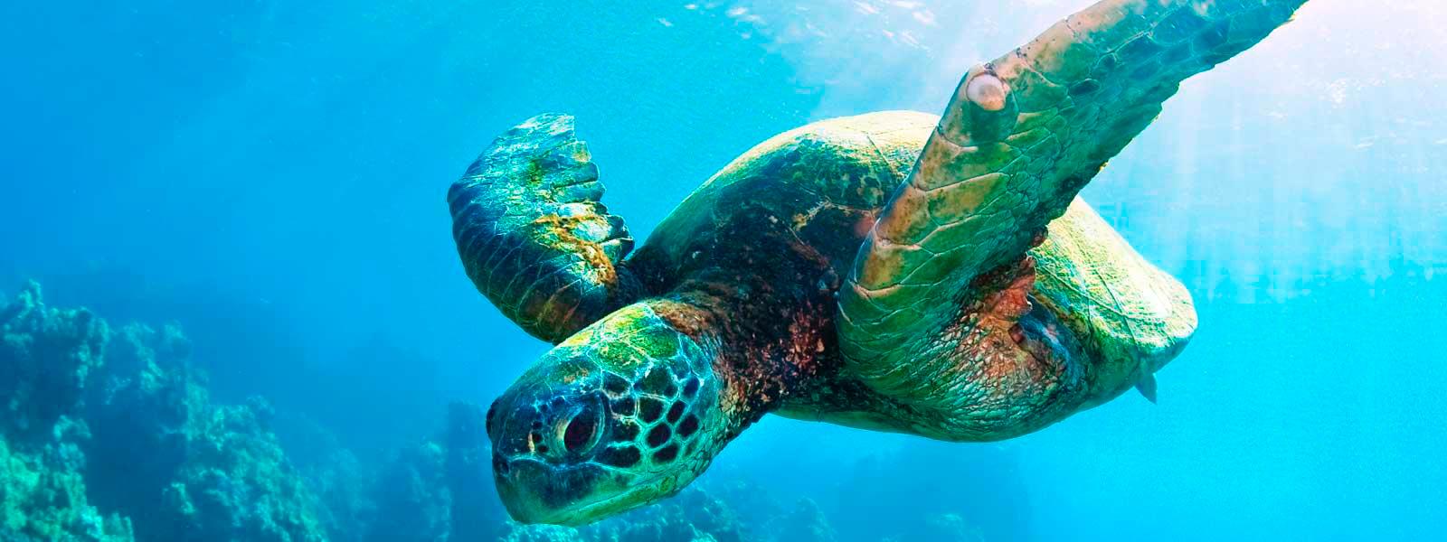 New-Zealand's-Ocean-Sanctuary