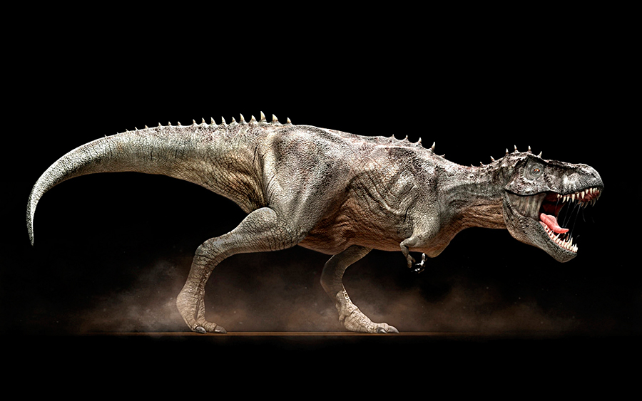 T-Rex-skeleton-will-be-placed-in-museum