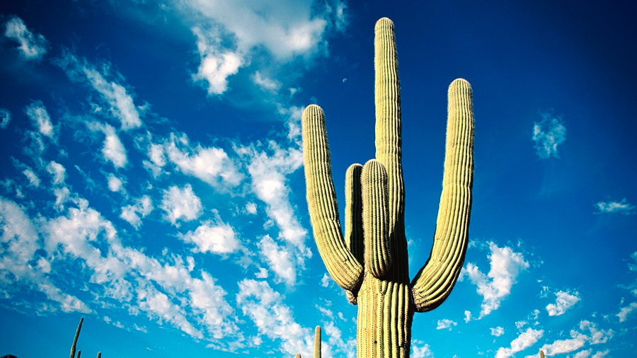 Cactus-Species-Threatened-by-Extinction