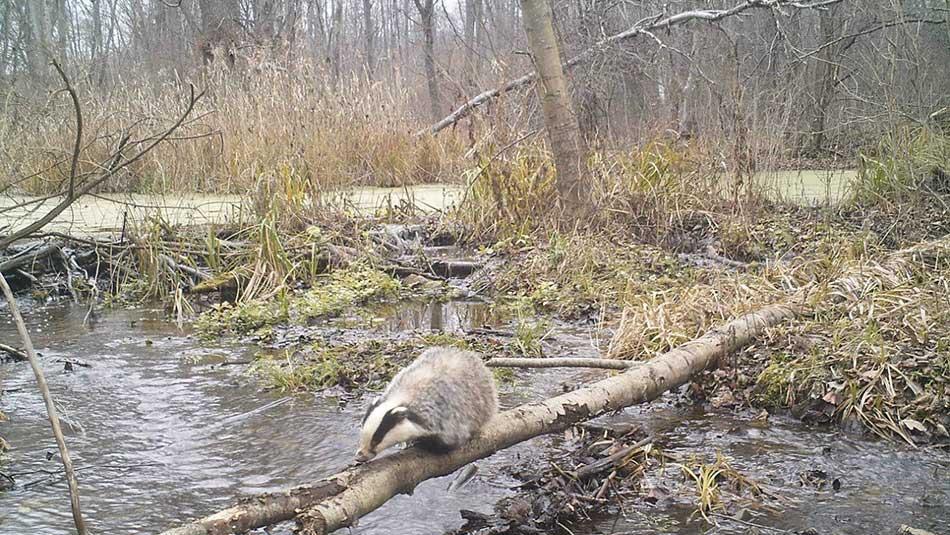 Chernobyl-wildlife