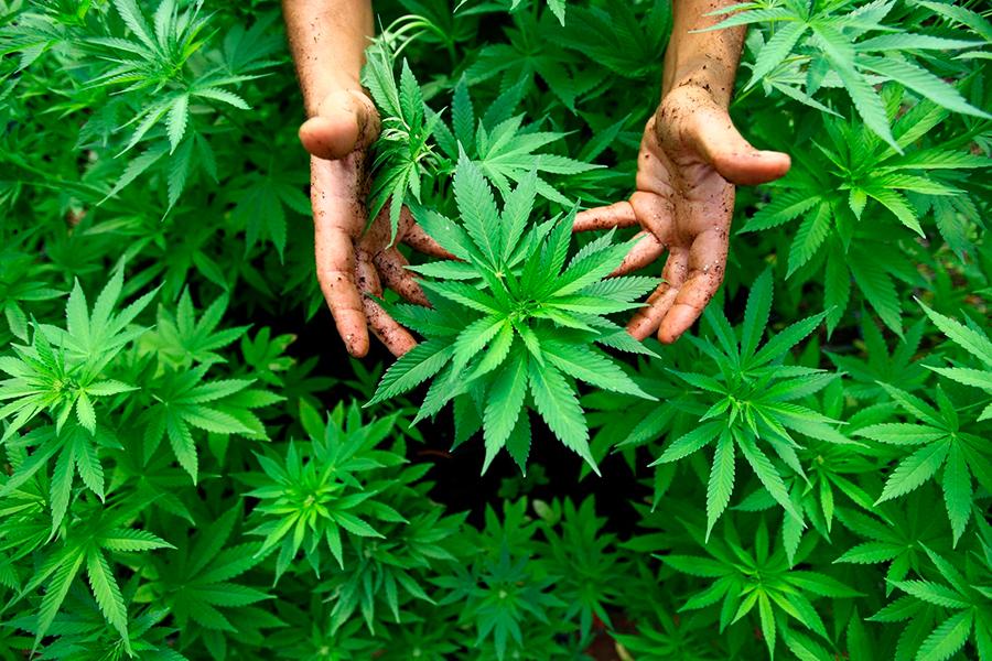 Ohio-votes-for-Marijuana-Legalization