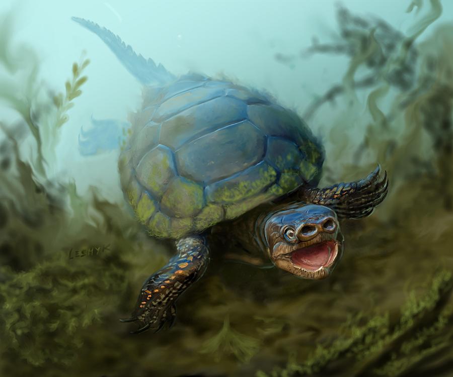 Rare-pig-snout-turtle