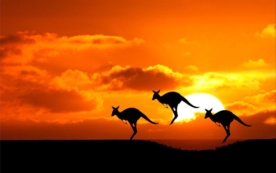Kangaroos'-gas-emission