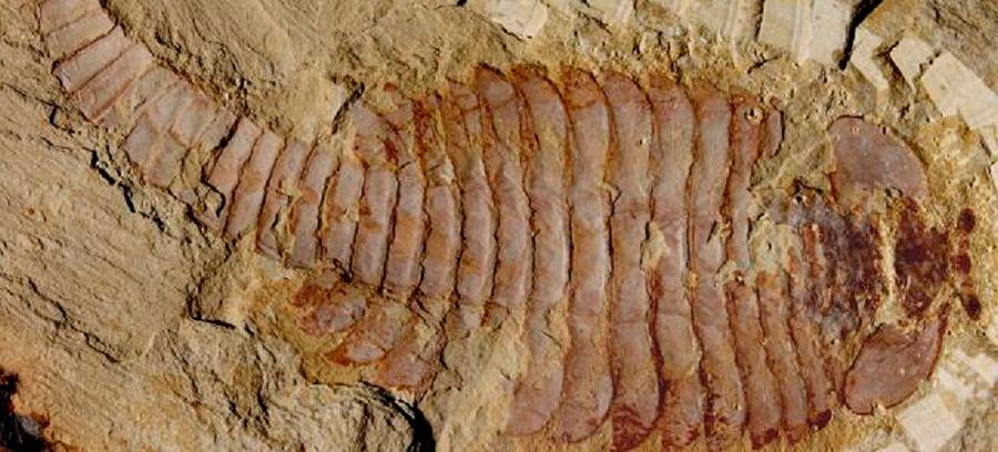 Fossilized-brain-tissue