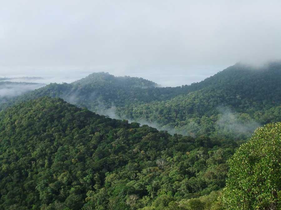 amazon-forest-decline