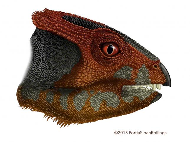 An artist's rendering of Hualianceratops is shown in this handout provided by Portia Sloan Rollings December 9, 2015. Credit: REUTERS/PORTIA SLOAN ROLLINGS/HANDOUT VIA REUTERS
