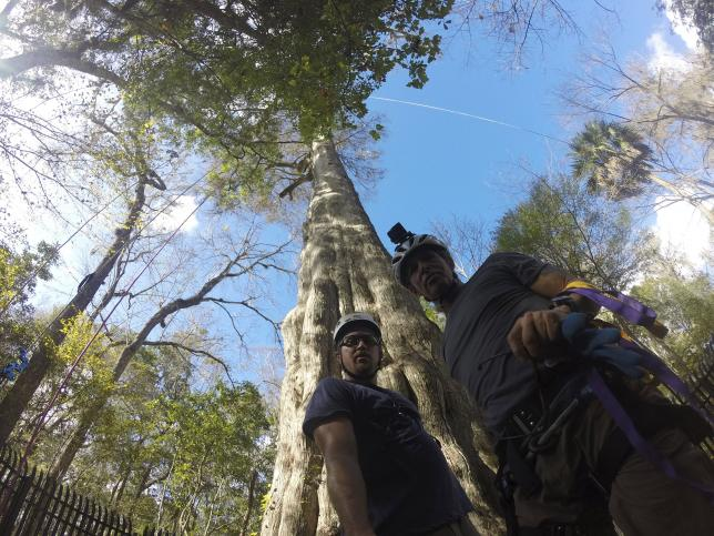 Jake Milarch (L) and Andrew Kittsley of the non-profit organization Archangel Ancient Tree Archive prepare to climb a 2,000-year-old bald cypress tree in Longwood, Florida, in this handout picture taken December 28, 2015. REUTERS/ARCHANGEL ANCIENT TREES/HANDOUT VIA REUTERS