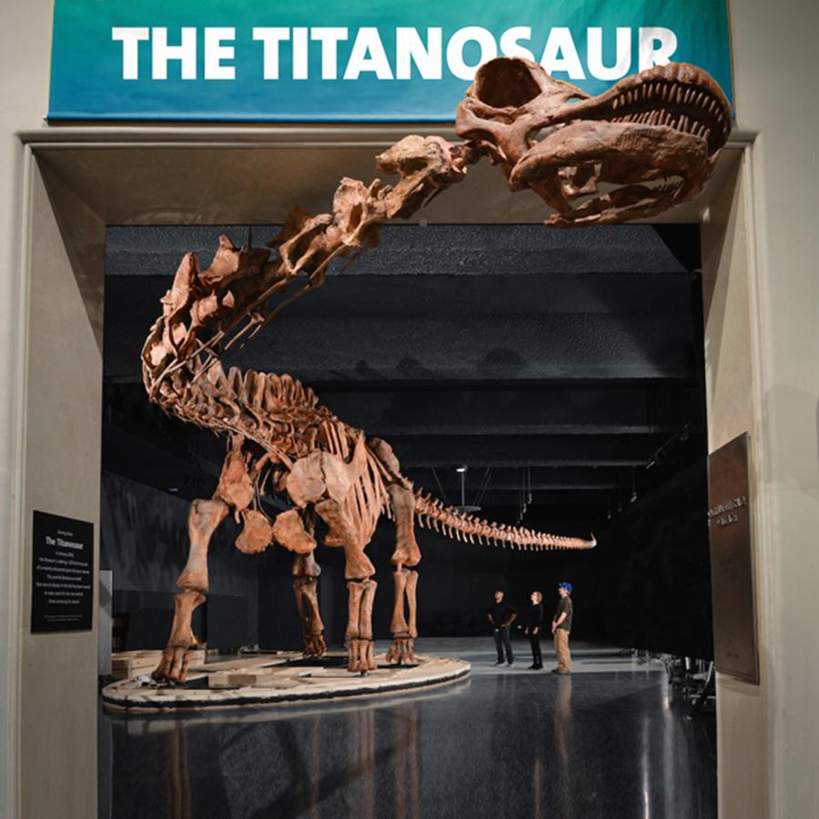 Titanosaur-replica