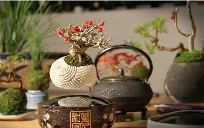 Image: Air Bonsai