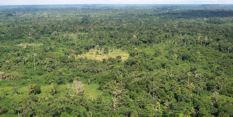 One of Liberia's tropical forests. Photo: USAID/Wikipedia