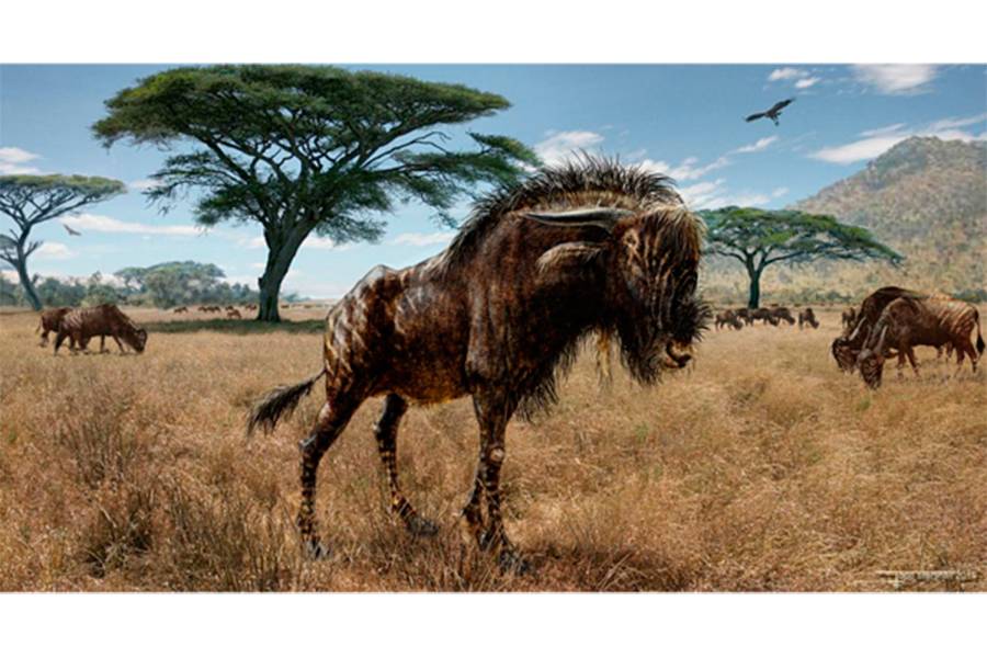 Dinosaur-and-mammal-same-nose