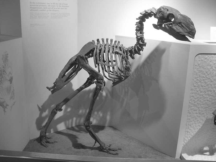 Gastornis_Smithsonian