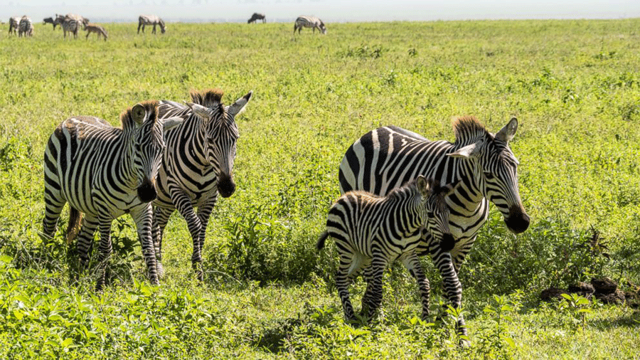 On Tuesday, the GMA show is going to present a new 360-degree episode of Amy Robach going on safari to the Tanzania's Ngorongoro Crater. Photo credit: ABC News