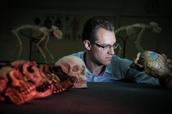 Alistair Evans of Monash University examines a range of hominin skull casts that were included in a new study that offers an explanation for why human wisdom teeth are so much smaller than other homonin species. Credit: The Christian Science Monitor/Courtesy of David Hocking