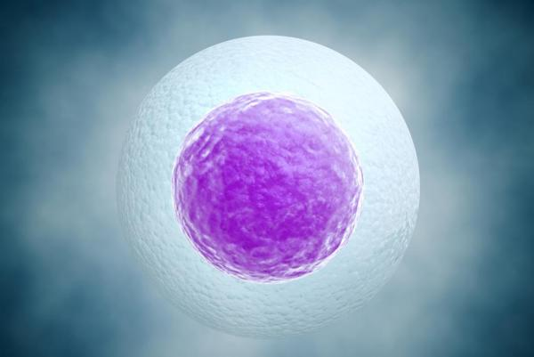 Naive pluripotent stem cells were cultured and grown by scientists at the University of Cambridge after being derived from a human embryo. While the procedure has been done with mice embryos for about 30 years, the scientists say they are the first to do it with a human embryo. Credit: UPI/Jezper/Shutterstock