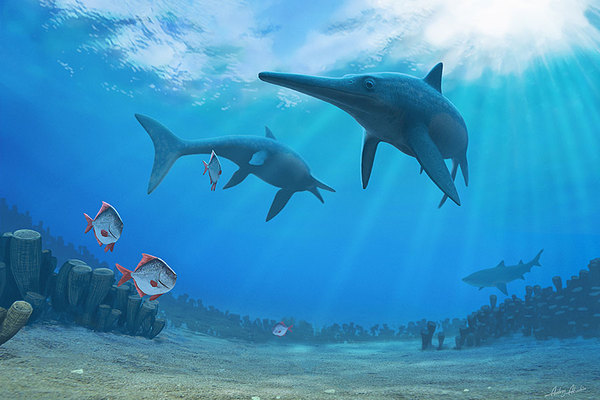 Two ichthyosaurs (Pervushovisaurus bannovkensis) wander through a middle Cenomanian low latitude ecosystem that will prevail for most of the Late Cretaceous: high sea level and sea temperatures, rudist reefs (Ichthyosarcolites, Hippurites), newly radiating neoselacian sharks and acanthomorph fishes (Aipichthyoides). Credit: The Christian Science Monitor/Andrey Atuchin/University of Oxford