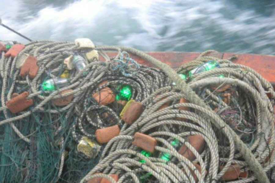Illuminated fishing nets used by a small-scale fishery reduced the number of green turtle deaths by 64%. Photo credit: University of Exeter / UPI