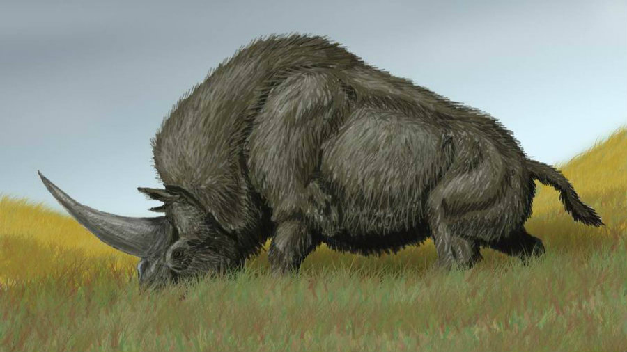 "Mistakenly known as ""Siberian unicorns"", a rhino-like species called Elasmotherium sibiricum survived for hundreds of thousands of years more than previously thought. Photo credit: Fusion"