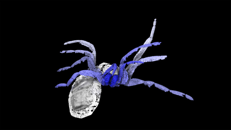 A group of researchers could finally expose the nature of a unique 305-million-years-old arachnid that looks like modern spiders but isn't really one. Photo credit: The Fossil Forum