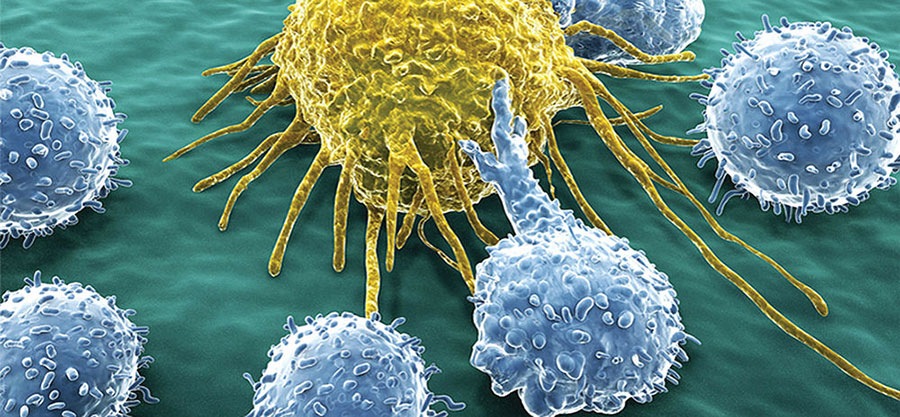 Immunotherapy-Cells