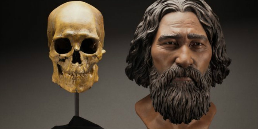 Researchers have found through DNA analysis and with the help of a genetic map designed by them that Kennewick Man is a Native American ancestry. Photo credit: Amanda Danning / Brittney Tatchell / Smithsonian Institution