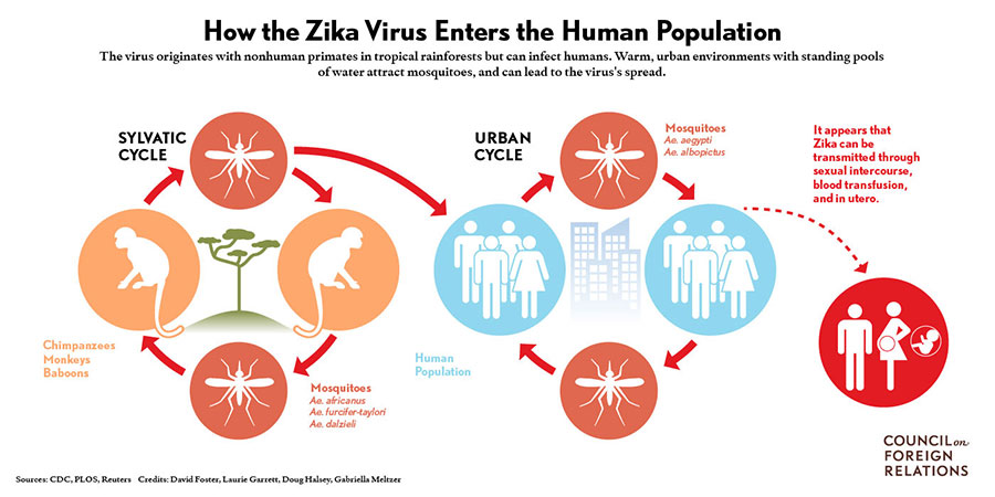 Pregnant-Woman-Infected-with-Zika