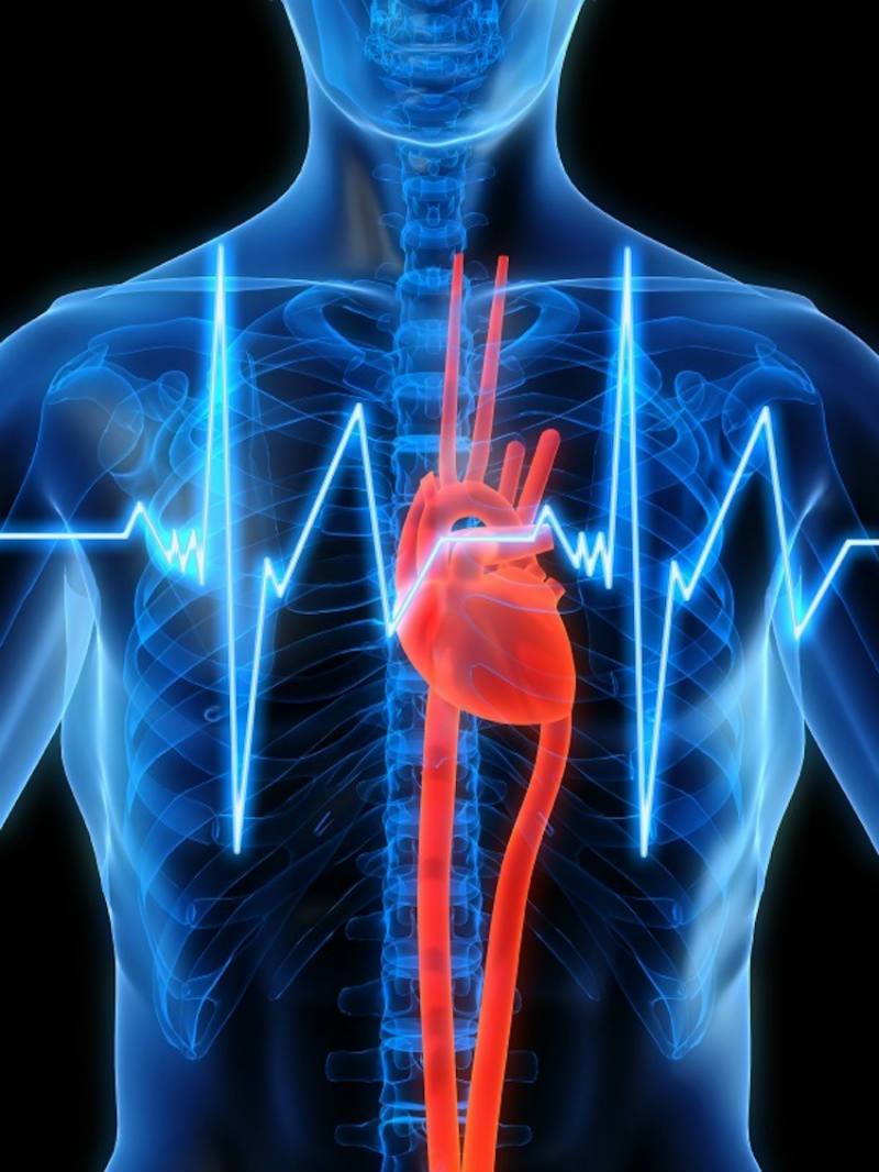 Heart explored thanks to 3D cardiac technology