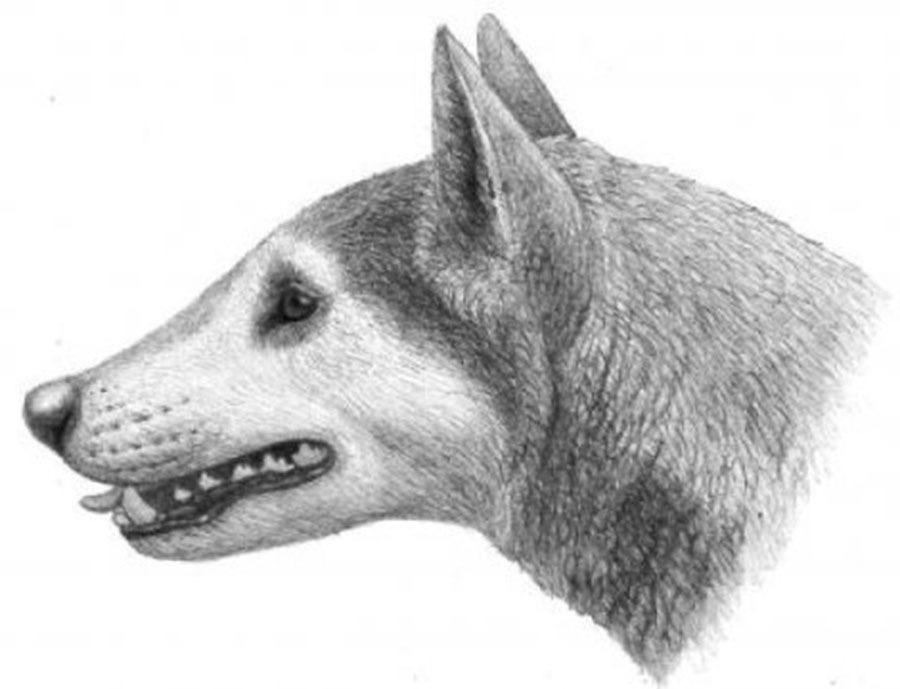 Scientists discovered the fossils of an ancient dog species
