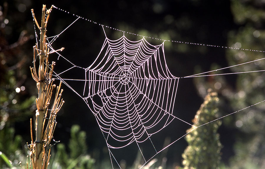 Scientists simulate spider web