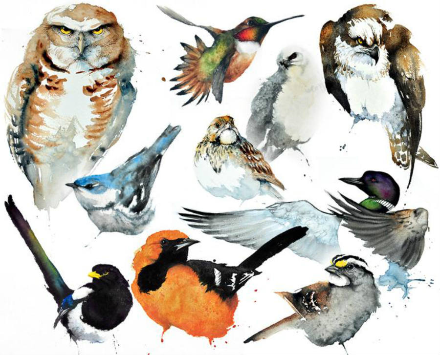 Things are not looking good for birds in north america for Birdhouse types