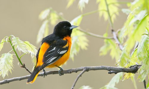 Climate change has been proven to have a significant impact on North American birds, as more than half the species in the area are considered as endangered. Image Credit: The Guardian