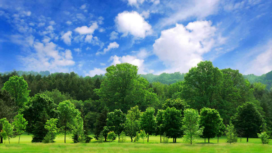 Trees were part of a recent and particular analysis made by researchers from Finland and Austria. Photo credit: Arbor Day Foundation
