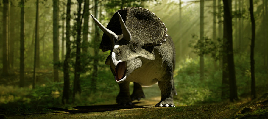 The newly discovered species of the family of Ceratopsian, much like the Triceratops, they had a shielding bone structure on the back of their skulls. Photo credit: Biology Pop
