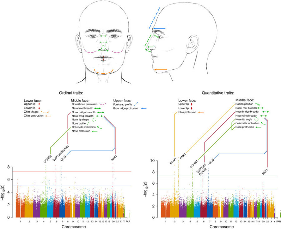 3D imaging was applied to closely review the facial features by measuring the exact proportions of each characteristic and to establish a statistic connection to the suspected genes. Photo credit: Nature