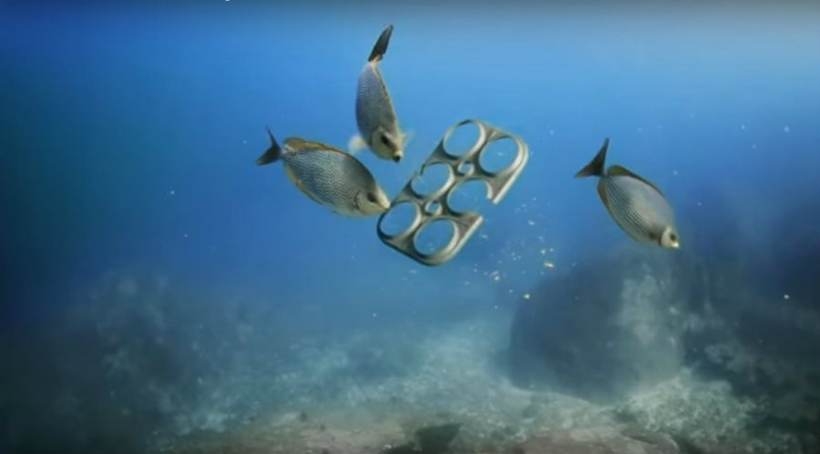 SaltWater Brewery, a craft brewing company from Florida, announced its new edible six-pack rings. Photo credit: Inhabitat