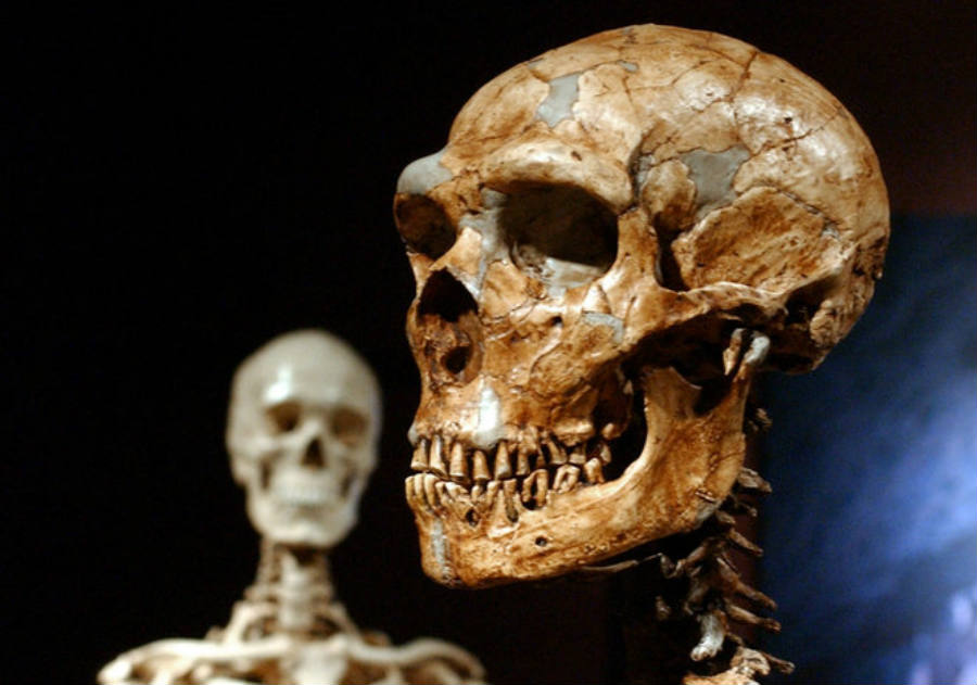 Neanderthal tools suggest that they had more advance skills than previously thought