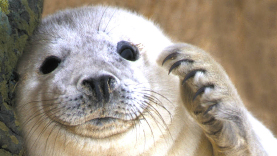 The NOAA has made something very clear, the tolerance for Seal pup-related Selfies has dropped to zero.