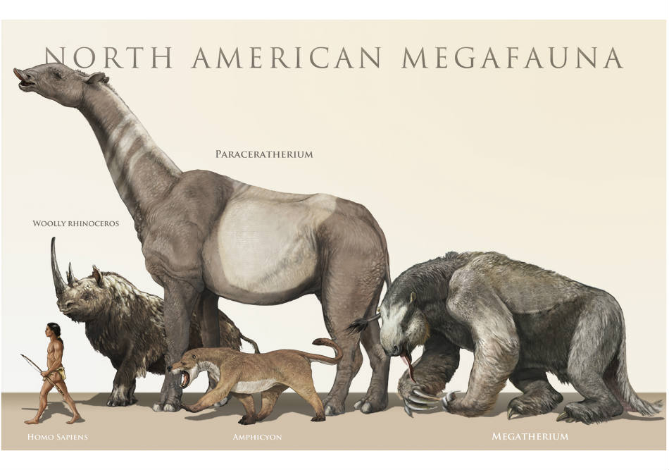 Judging from the size of the South African Megafauna predators, human populations co-existing with them had their work cut out for them in terms of hunt. Image Credit: Barefoot Muse