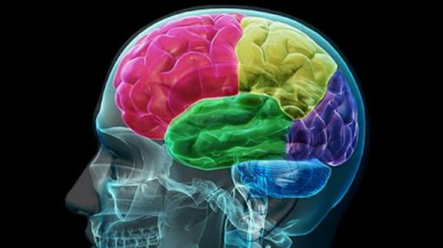 Another discovery was that during tasks that measured the reaction time to a visual stimulus, methylene blue also increased responses in the bilateral insular cortex (an area related to emotional responses). Image Credit: Deccan Chronicle