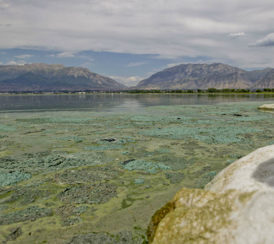 Utah Lake is nothing but the latest park to close public access to people due toxic algae bloom. Florida has been the main affected by this as the list for algae-infested waters continues to rise. Image Credit: Daily Herald
