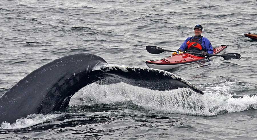 Kayack-humpback-whale