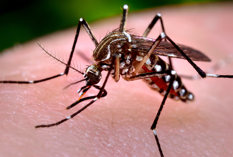 West-Nile-Virus-in-Solano-County