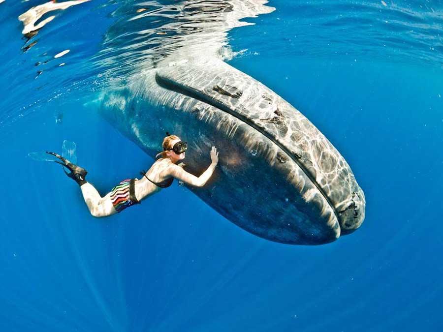 Blue-Whales-Feeding-Technique