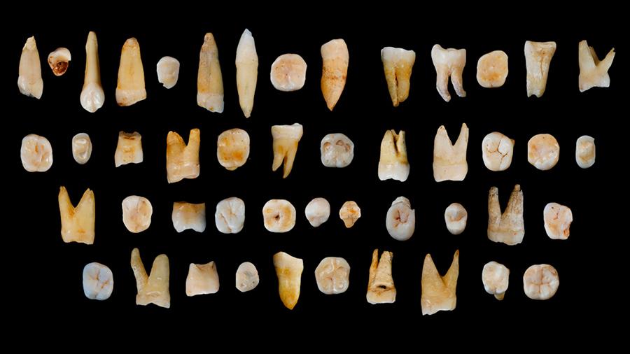 Homo-Sapiens-teeth-found-in-China