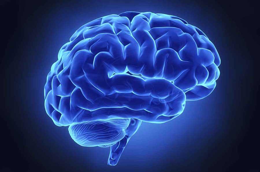brain-opioids