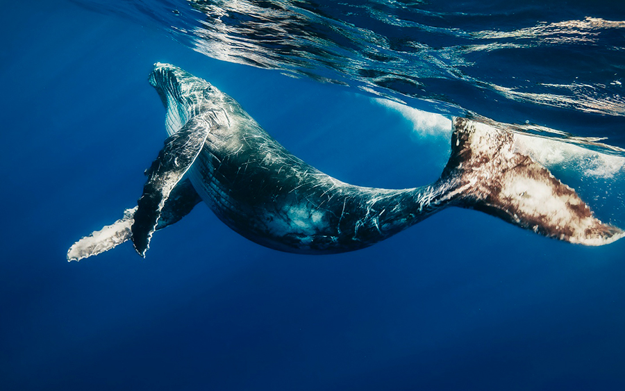 Mammals'-waste-and-ecosystem